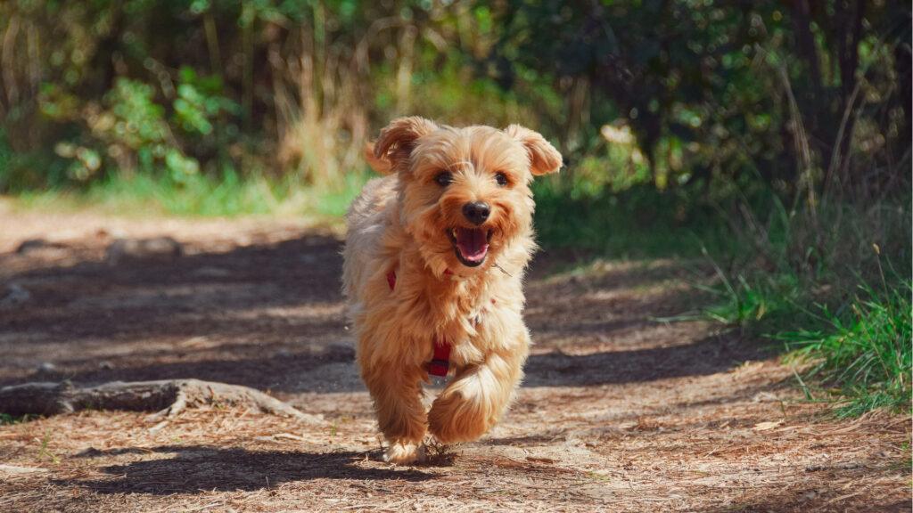 entrega-credencial-canina